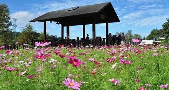 台北也有賞花秘境 五大景點媲美名所