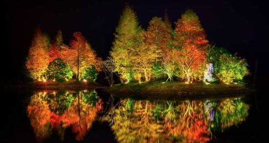令人意想不到的落羽松秘境 夜間打燈後宛如日本庭園