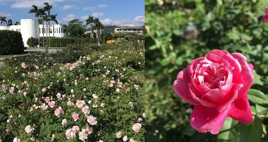 台北也有歐風莊園 玫瑰盛放賞花拍照好去處