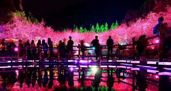今年櫻花季別再錯過 全台十大賞櫻景點