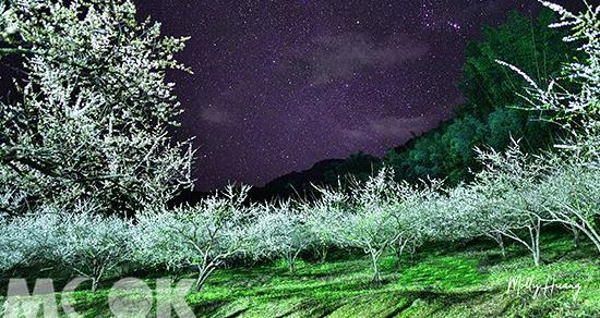 雪白花海夜晚更美麗 秘境梅園賞花新熱點