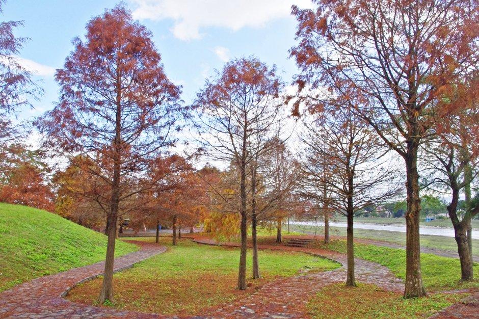 季節限定美景~秋冬必訪落羽松,還未造訪的人快快筆記!